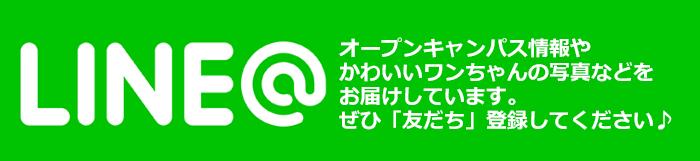 line_ad2